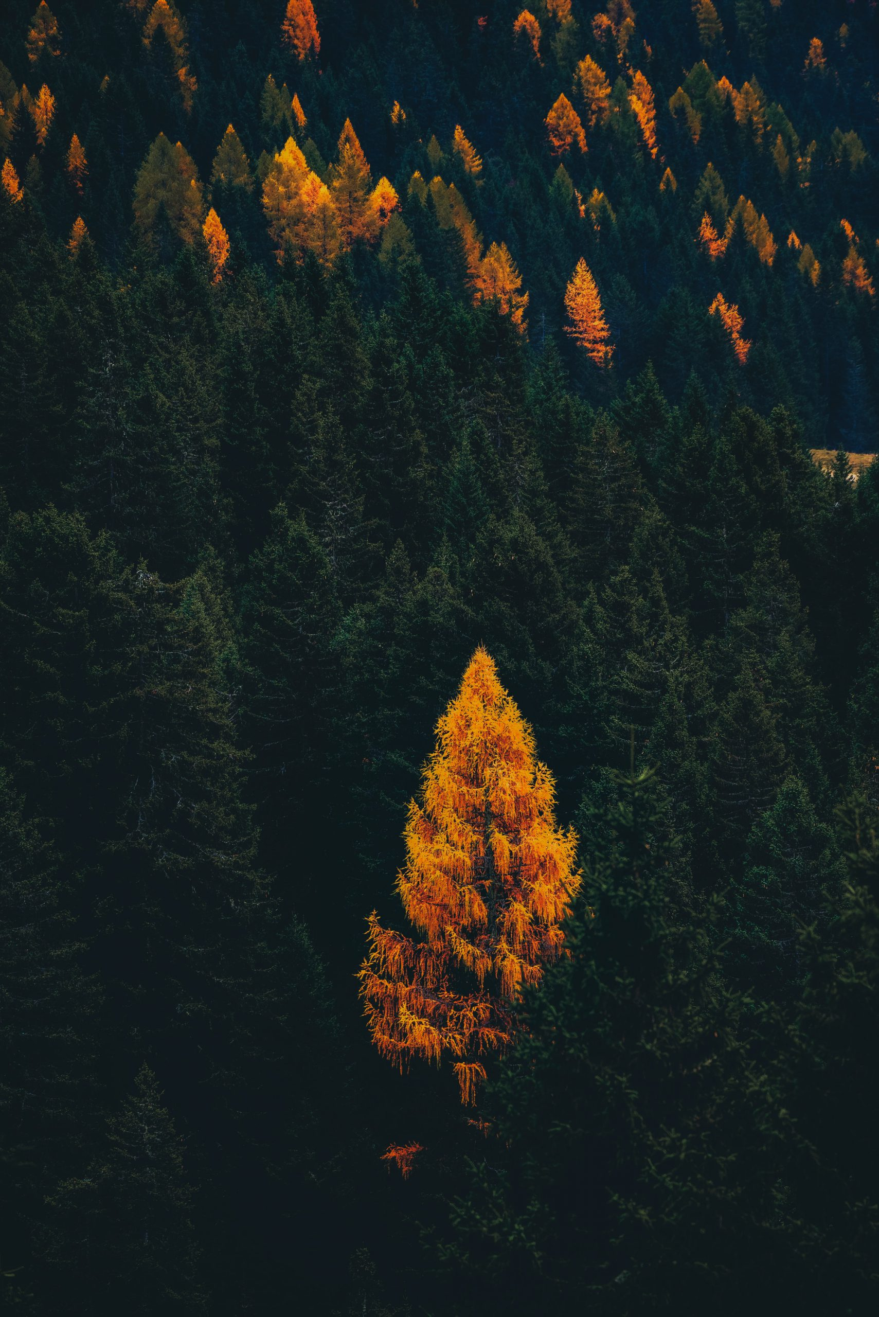 green and brown trees during daytime