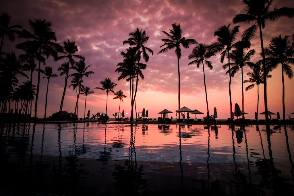 low angle photo of coconut trees beside body of water